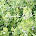 Plantes Sauvages (c) Association Ôde à soi.e