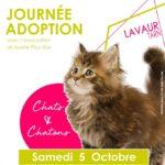 Journee adoption : chats & chatons (c) Aux Quatre Pat' / Un Avenir Pour Eux